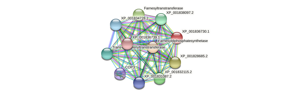 CC1G_08115 protein (Coprinopsis cinerea) - STRING interaction network