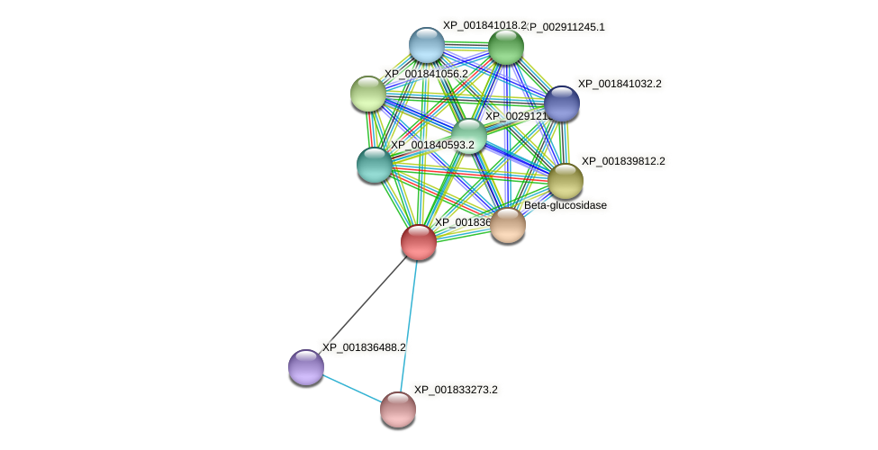 CC1G_04165 protein (Coprinopsis cinerea) - STRING interaction network