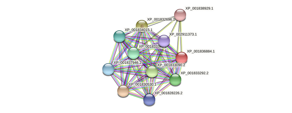 CC1G_00020 protein (Coprinopsis cinerea) - STRING interaction network