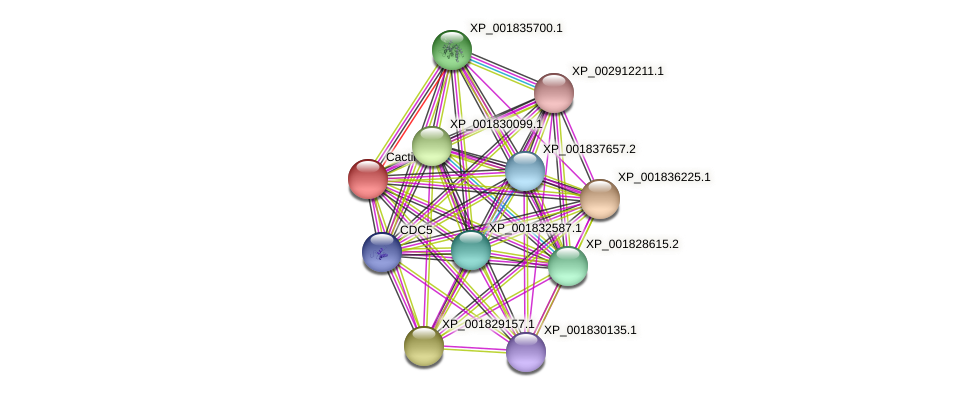 CC1G_00031 protein (Coprinopsis cinerea) - STRING interaction network
