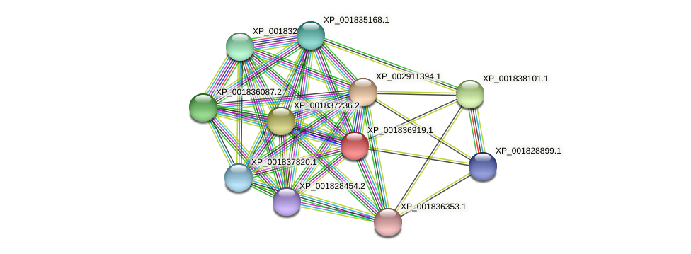 CC1G_00055 protein (Coprinopsis cinerea) - STRING interaction network