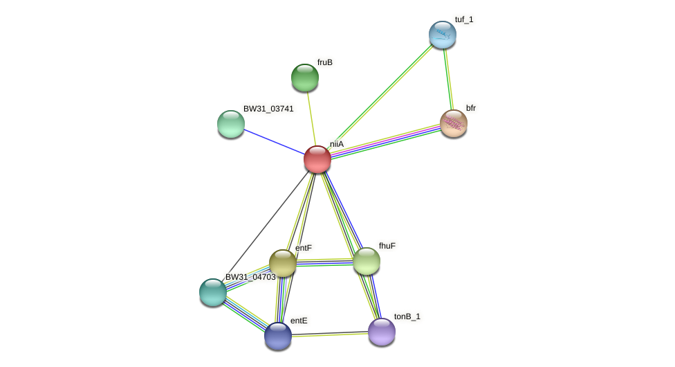 niiA protein (Pantoea agglomerans) - STRING interaction network