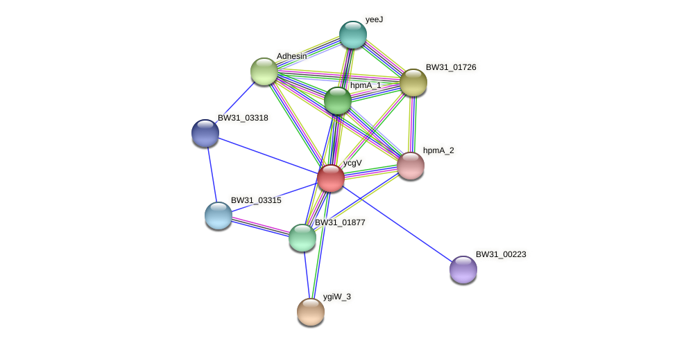 ycgV protein (Pantoea agglomerans) - STRING interaction network