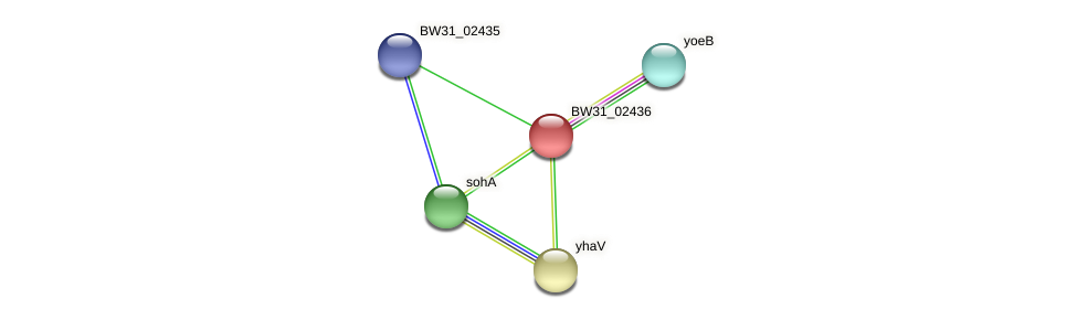 BW31_02436 protein (Pantoea agglomerans) - STRING interaction network