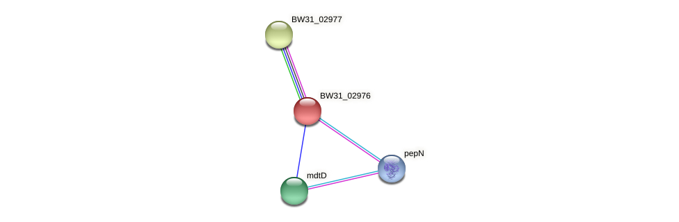 BW31_02976 protein (Pantoea agglomerans) - STRING interaction network
