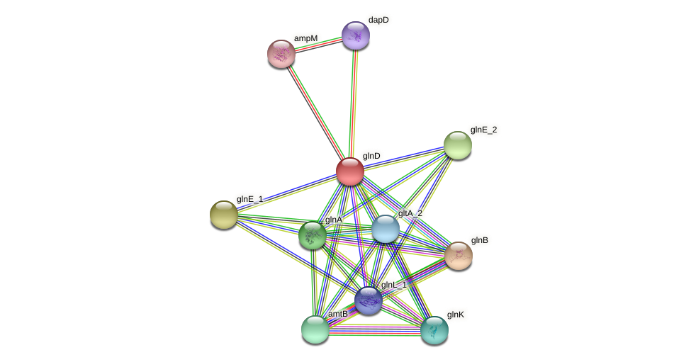 glnD protein (Pantoea agglomerans) - STRING interaction network