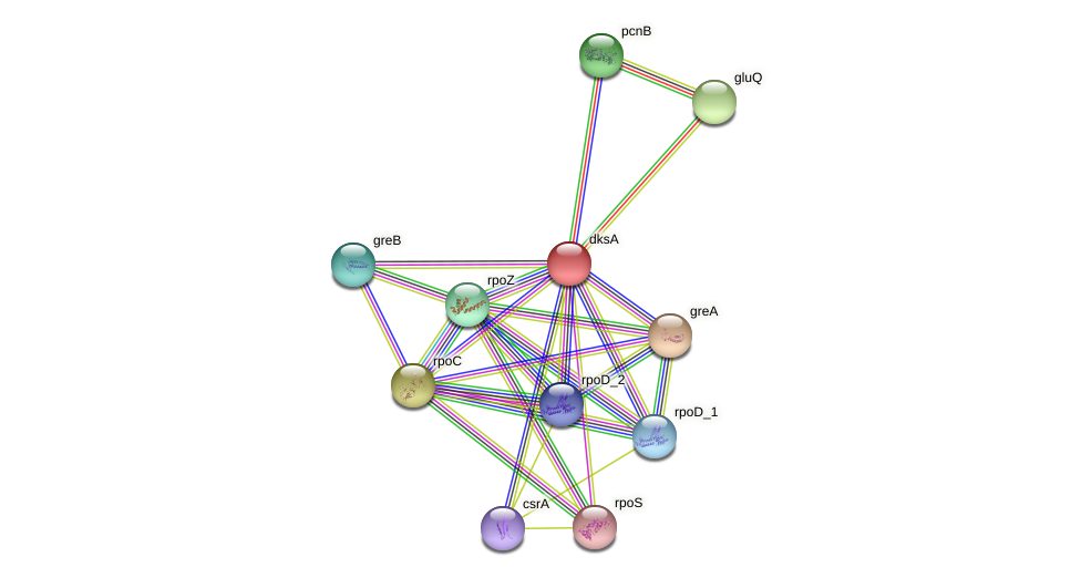 dksA protein (Pantoea agglomerans) - STRING interaction network