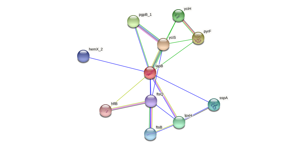 lapB protein (Pantoea agglomerans) - STRING interaction network