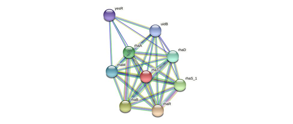 rhaT protein (Pantoea agglomerans) - STRING interaction network