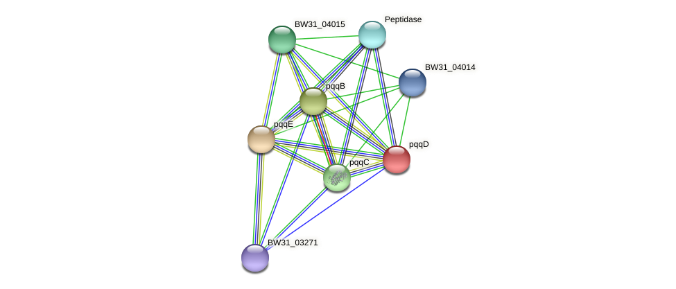 pqqD protein (Pantoea agglomerans) - STRING interaction network