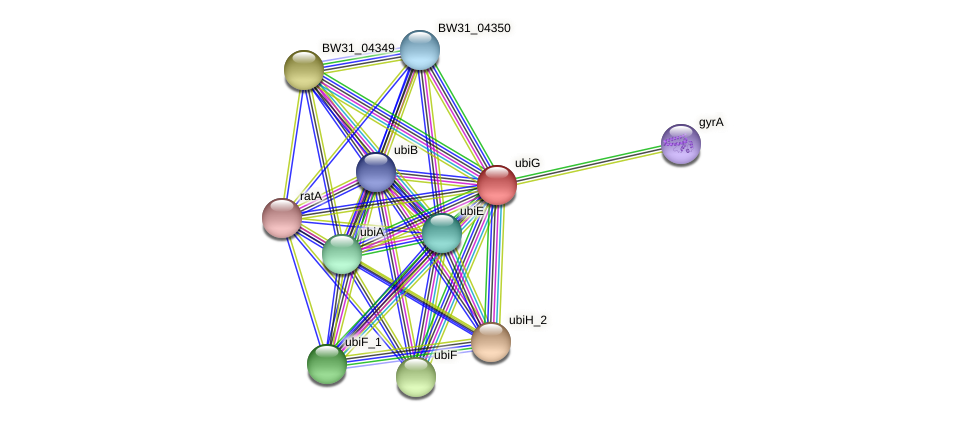 ubiG protein (Pantoea agglomerans) - STRING interaction network