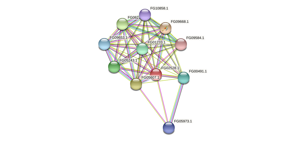 FG02528.1 protein (Fusarium graminearum) - STRING interaction network