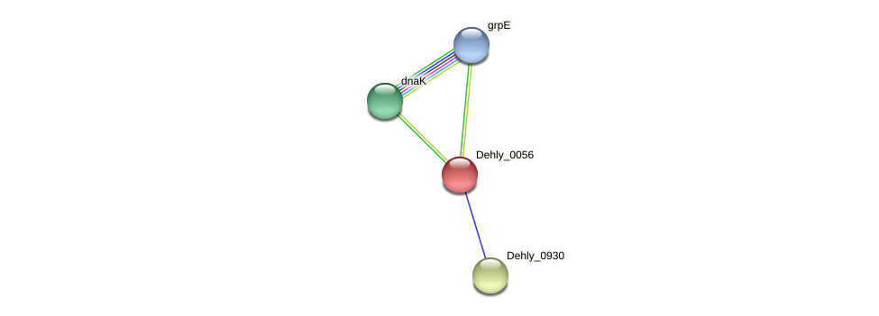 Dehly_0056 protein (Dehalogenimonas lykanthroporepellens) - STRING interaction network