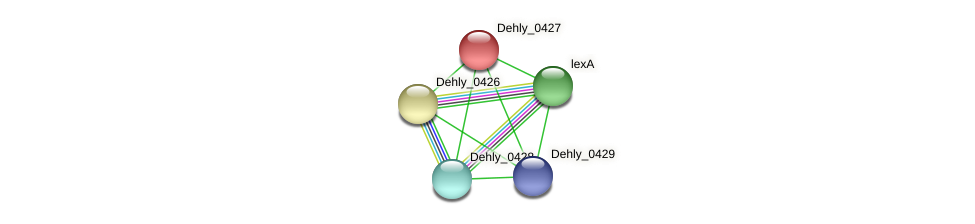 Dehly_0427 protein (Dehalogenimonas lykanthroporepellens) - STRING interaction network