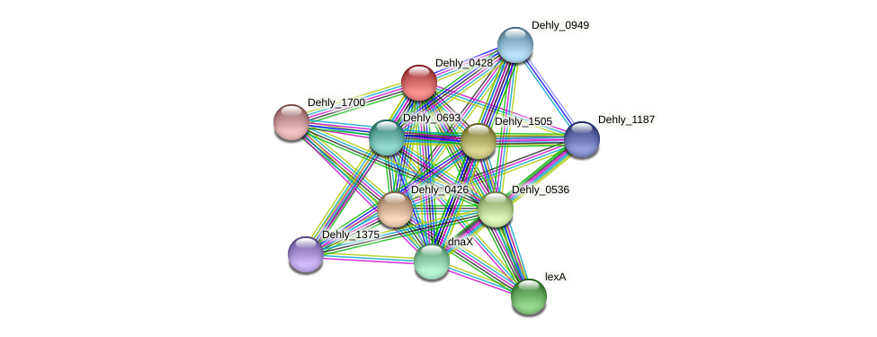 Dehly_0428 protein (Dehalogenimonas lykanthroporepellens) - STRING interaction network