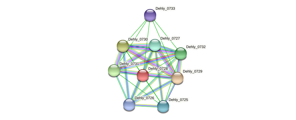 Dehly_0728 protein (Dehalogenimonas lykanthroporepellens) - STRING interaction network