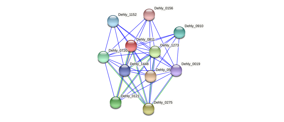 Dehly_0811 protein (Dehalogenimonas lykanthroporepellens) - STRING interaction network
