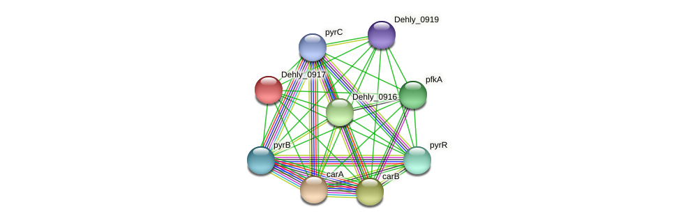 Dehly_0917 protein (Dehalogenimonas lykanthroporepellens) - STRING interaction network