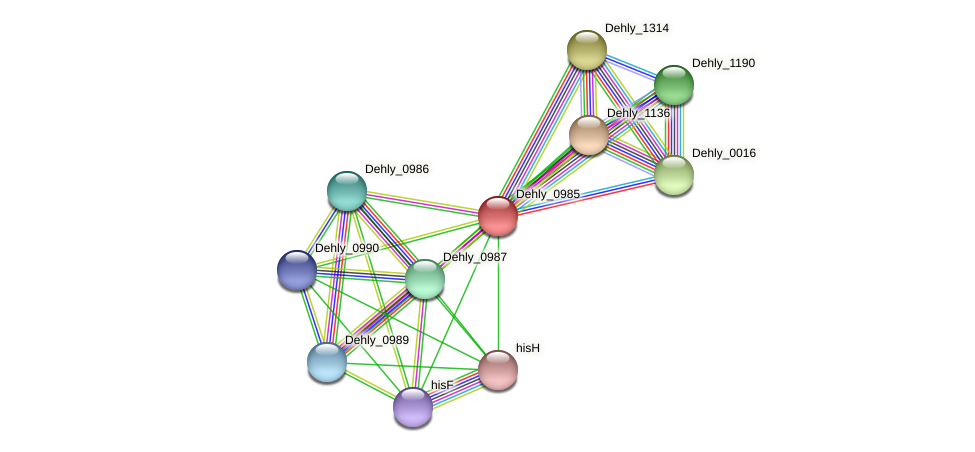 Dehly_0985 protein (Dehalogenimonas lykanthroporepellens) - STRING interaction network