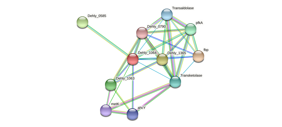 Dehly_1064 protein (Dehalogenimonas lykanthroporepellens) - STRING interaction network