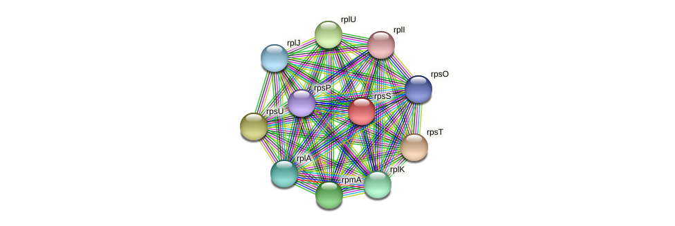 rpsS protein (Dehalogenimonas lykanthroporepellens) - STRING interaction network