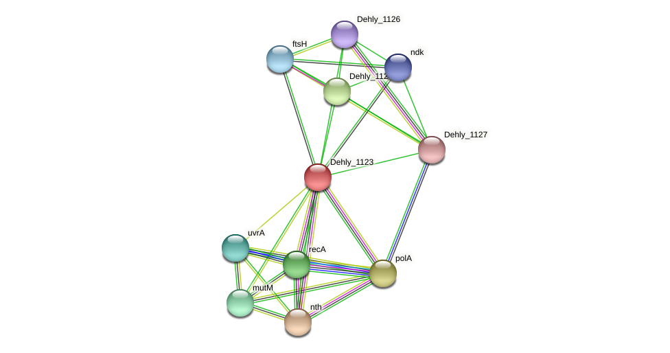 Dehly_1123 protein (Dehalogenimonas lykanthroporepellens) - STRING interaction network