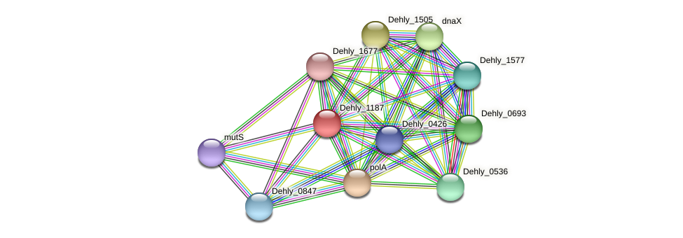 Dehly_1187 protein (Dehalogenimonas lykanthroporepellens) - STRING interaction network