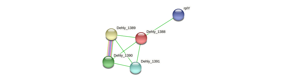 Dehly_1388 protein (Dehalogenimonas lykanthroporepellens) - STRING interaction network