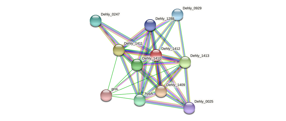Dehly_1412 protein (Dehalogenimonas lykanthroporepellens) - STRING interaction network