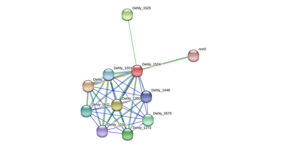 Dehly_1524 protein (Dehalogenimonas lykanthroporepellens) - STRING interaction network