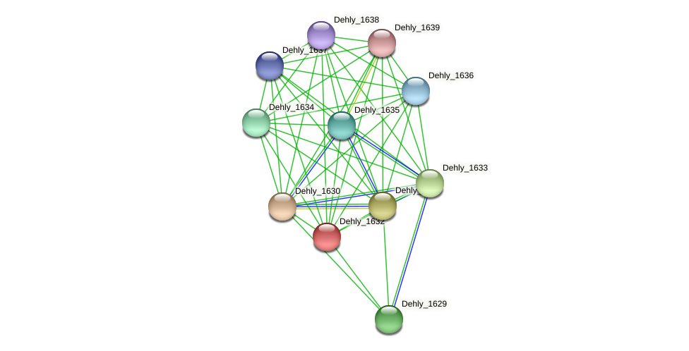Dehly_1632 protein (Dehalogenimonas lykanthroporepellens) - STRING interaction network