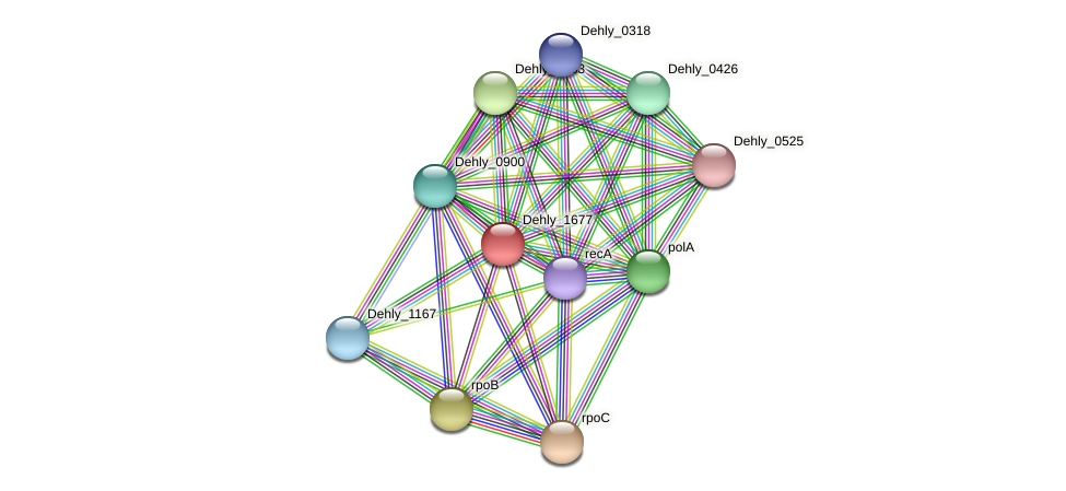 Dehly_1677 protein (Dehalogenimonas lykanthroporepellens) - STRING interaction network