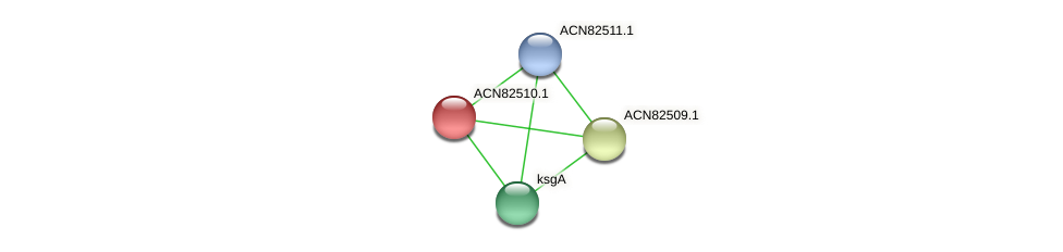 ACN82510.1 protein (Brachyspira hyodysenteriae) - STRING interaction network