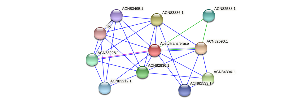 ACN82589.1 protein (Brachyspira hyodysenteriae) - STRING interaction network