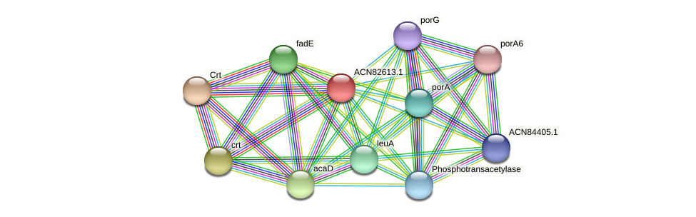 ACN82613.1 protein (Brachyspira hyodysenteriae) - STRING interaction network