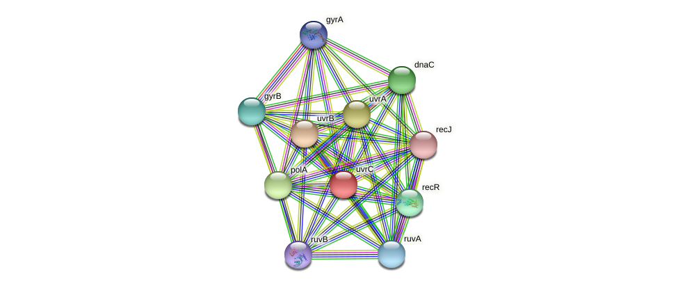 uvrC protein (Brachyspira hyodysenteriae) - STRING interaction network