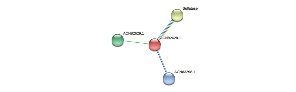 ACN82628.1 protein (Brachyspira hyodysenteriae) - STRING interaction network