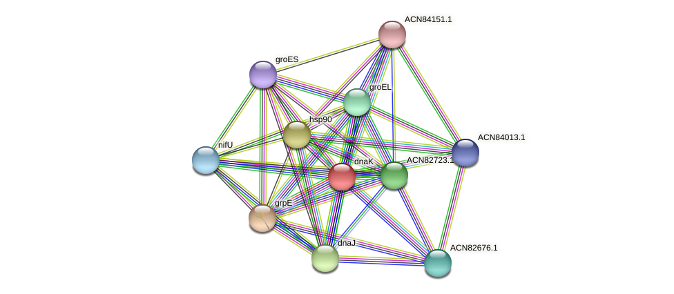 dnaK protein (Brachyspira hyodysenteriae) - STRING interaction network