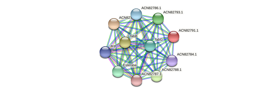 BHWA1_00291 protein (Brachyspira hyodysenteriae) - STRING interaction network