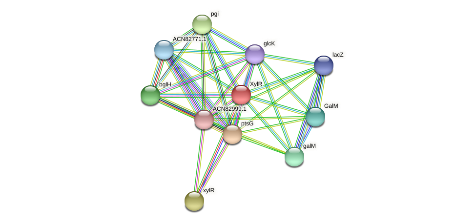 ACN82824.1 protein (Brachyspira hyodysenteriae) - STRING interaction network