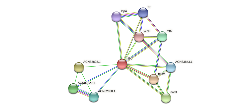 hflX protein (Brachyspira hyodysenteriae) - STRING interaction network