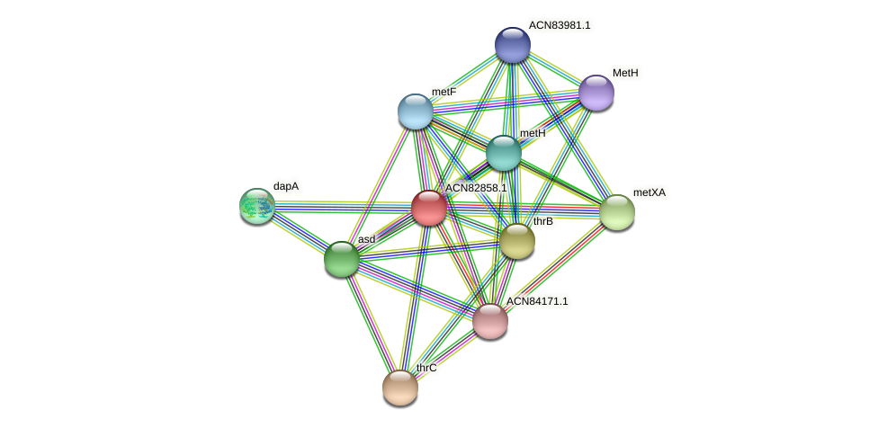 ACN82858.1 protein (Brachyspira hyodysenteriae) - STRING interaction network