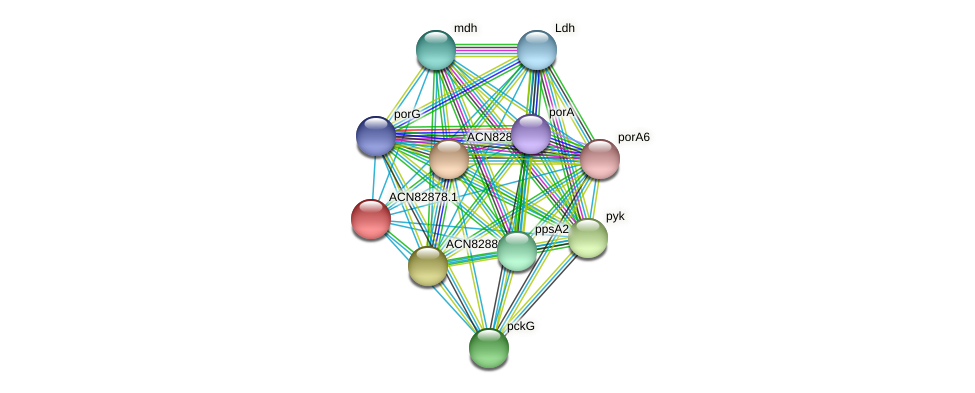 ACN82878.1 protein (Brachyspira hyodysenteriae) - STRING interaction network