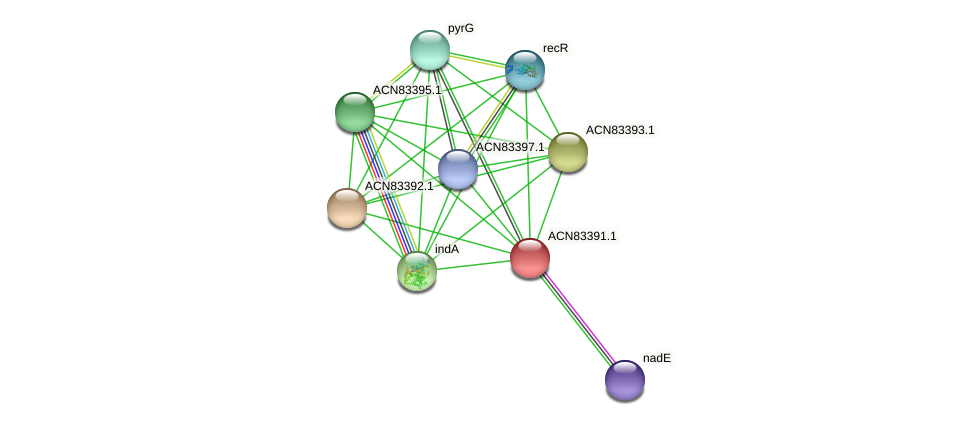 BHWA1_00900 protein (Brachyspira hyodysenteriae) - STRING interaction network
