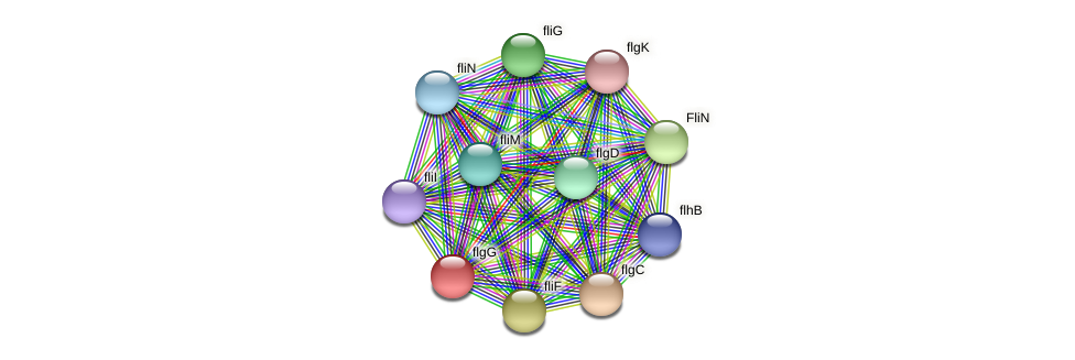 ACN83407.1 protein (Brachyspira hyodysenteriae) - STRING interaction network