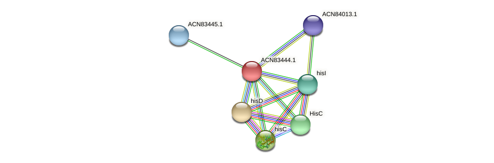ACN83444.1 protein (Brachyspira hyodysenteriae) - STRING interaction network
