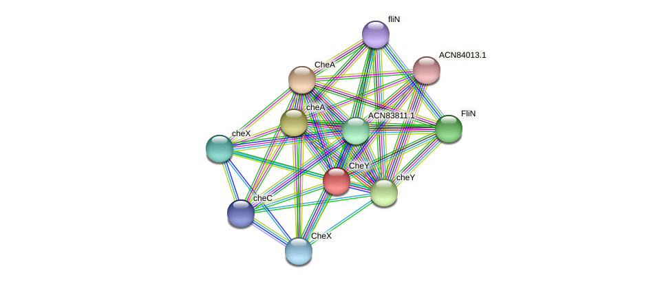 ACN83483.1 protein (Brachyspira hyodysenteriae) - STRING interaction network