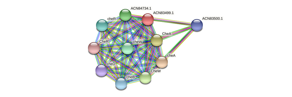 ACN83499.1 protein (Brachyspira hyodysenteriae) - STRING interaction network