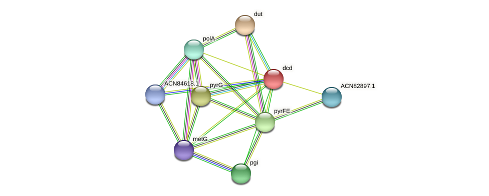 dcd protein (Brachyspira hyodysenteriae) - STRING interaction network