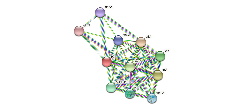 pgi protein (Brachyspira hyodysenteriae) - STRING interaction network